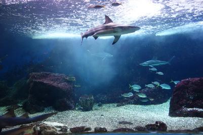 aquarium-de-la-guadeloupe