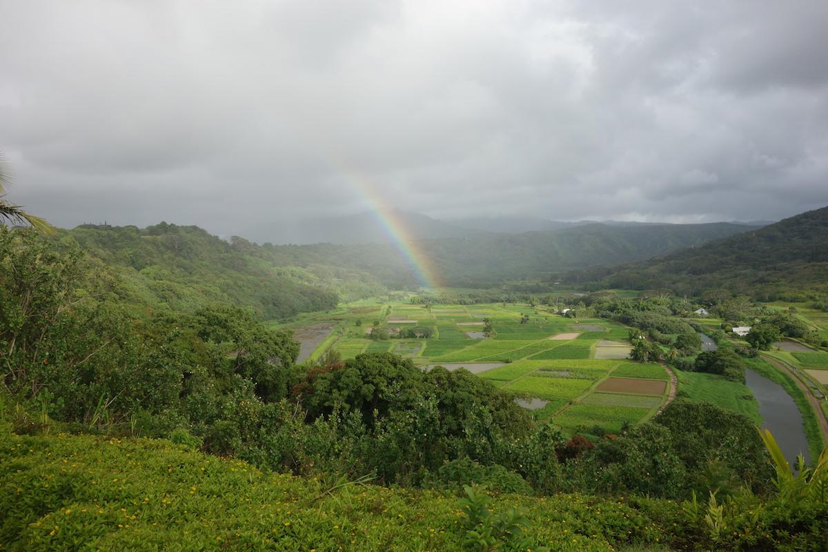 hawaii-kauai-hinterland