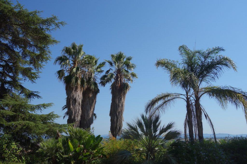 hyeres-palmen