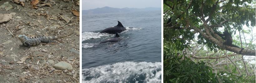 tierwelt-costarica