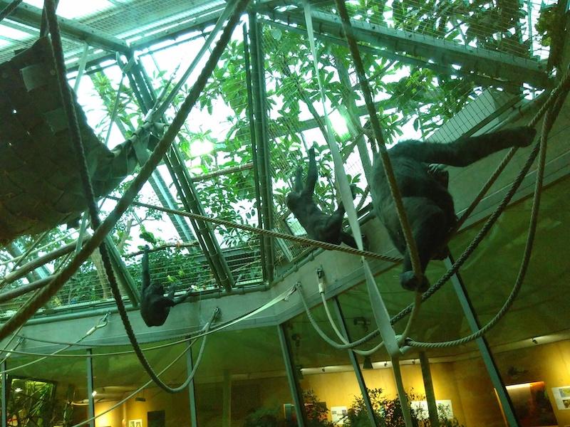 Affen bei der Fütterung im Zoo Zürich
