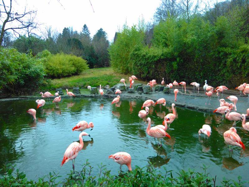 Ausflüge Zürich Familien Zoo Zürich