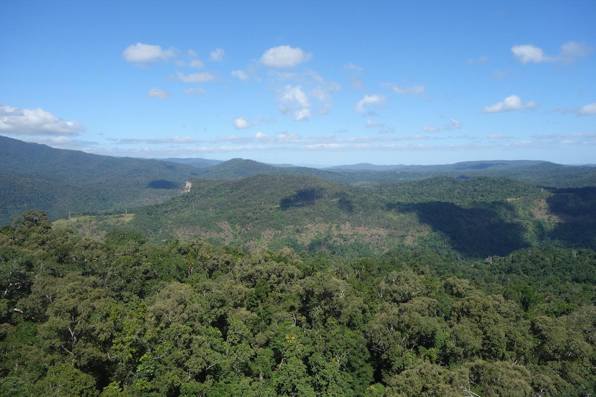 australien-queensland-regenwald