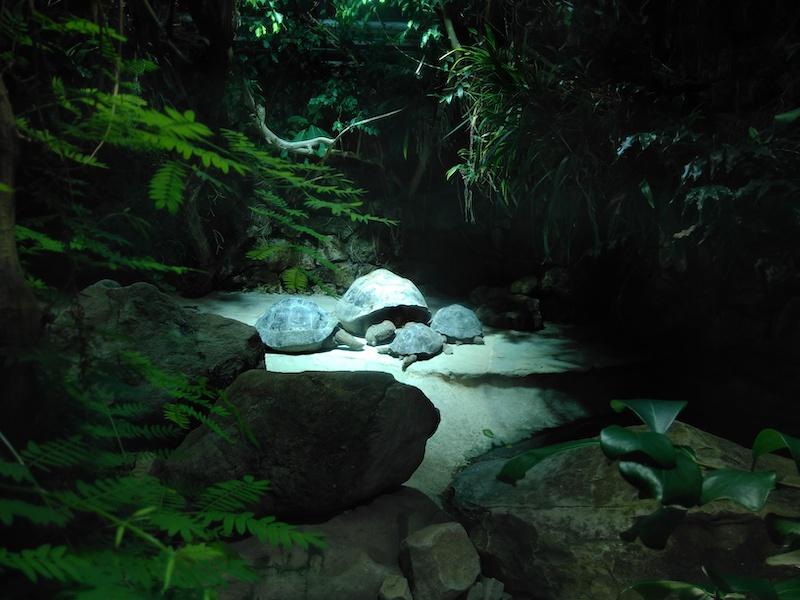Galapago-Riesenschildkröten im Zoo Zürich